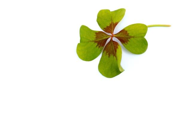 un trèfle à 4 feuilles pour illustrer un article sur la chance, la confiance, la loi d'attraction, le moment présent et le lâcher prise