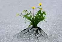 la force de la nature, persévérer malgré tout